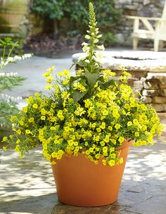 Not-So-Mellow Yellow ContainerChoose this design for a cheery container garden that is sure to turn heads. For one 18-1/2-inch pot you'll need: Thriller: 1 foxglove (Digitalis purpurea 'Camelot Cream') Filler: 3 marguerite daisies (Argyranthemum frutescens 'Madeira Primrose') Spiller: 4 yellow calibrachoa (Calibrachoa Superbells 'Yellow Chiffon') All-White Moon Container GardenThis monochromatic container garden adds a stunning glow to your garden at night. For one 18-1/2-inch pot you'll…