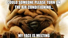 I feel like this thanks to this heat wave happening right now!