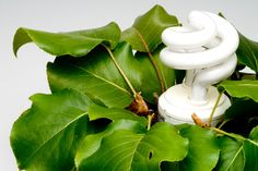 ***¿Cómo hacer una Maceta con Lámpara?*** Quizás nunca antes pensaste en combinar la tierra, la luz y el agua, pero ahora podrás hacerlo con esta original maceta con lámpara integrada. ¡A ver cómo te queda!....SIGUE LEYENDO EN..... http://comohacerpara.com/hacer-una-maceta-con-lampara_10728h.html