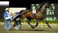 """SMOKIN UP, """"Trigger"""" retired record holder for the Southern Hemisphere. Harness Racer!"""