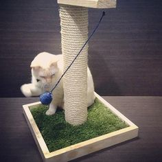 Cat Playground, arranhador para gatos, prateleiras para gatos, Cat Furnitures, móveis para gatos, Nicho para gatos La RoOteria Atelier Diy Cat Toys, Kitten Toys, Cat Playground, Cat Scratcher, Cat Room, Pet Furniture, Cat Birthday, Small Cat, Cat Tree