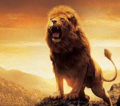 REFLEXÃO DO DIA: Parábola : A historia dos 3 leões