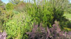 garden blog falon mihalic