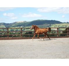 Fantastic three-year-old filly for sale | HorseDeals.co.uk