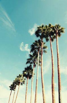 palm tree art print // photography // mid century california art print