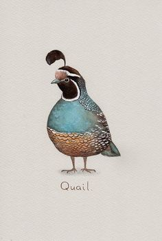 Quail Art Print from an original watercolour painting by TinyRed