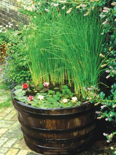 If space is limited, a small fountain, bubbling millstone or half-barrel or trough filled with water and aquatic plants can be a good option. Place your feature by a seat or close to the house where it will be visible from the window. When planting a miniature pool, take care to avoid vigorous plants and rely on small, compact plants like pygmy waterlilies.