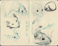 Rat Sketches by my-ain-sel on deviantART