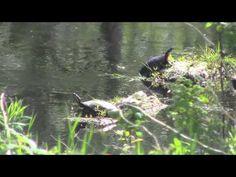 ▶ Pond Life - YouTub