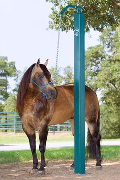 Downunder Horsemanship | Training Tip of the Week: Why you should tie your horse up