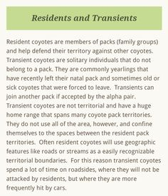 Coyote Facts, Coyote S, Large Animals, How To Plan