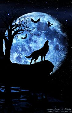 Wolf howling at the moon, composite art. – Mathilde Sakura Wolf howling at the moon, composite art. It's a wolf moon tomorrow night. What rituals are my witchey friends doing? Anime Wolf, Wolf Love, Beautiful Wolves, Beautiful Moon, Wolf Tattoos, Wolf Spirit, Spirit Animal, Tier Wolf, Wolf Artwork