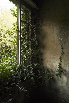abandoned, decay,overgrown room