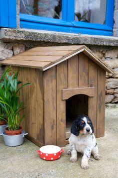 Lasurer une niche pour chien