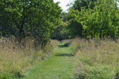 Sissinghurst Castle orchard grass path mown. The best of two worlds (orchard and meadow) combined to perfection.