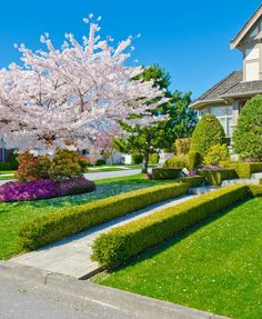 The full-bloomed dogwood tree sprinkles petals on the grassy ground and turns the concrete pathway into a floral aisle that ends at a delicately designed topiary. Trees For Front Yard, Front Yard Decor, Front Yard Design, Landscaping Around Trees, Front Yard Landscaping, Landscaping Ideas, Landscaping Shrubs, Lawn And Garden, Garden Paths