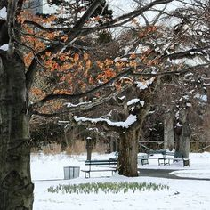 from @902_photography  What season is it exactly?  Last years leaves hang on for dear life while the promise of spring peeks through the snow.  A rare treat to walk through the Halifax Public Gardens after a snowfall... Beautiful in any weather. . . . #halifaxpublicgardens #halifax #downtownhalifax #NovaScotia #canada #canon #nationalhistoricsite #nationalhistoricsiteofcanada #victoriangarden #oc_signsofspring2016 #eastcoast #shareyourweather #thisiswhereilive