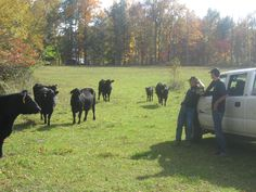 ... Tennessee when he had the opportunity to stop and visit with Wayne Day and Nick Rippy, a grandfather/grandson duo whose passion for good Angus cattle is ...
