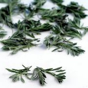 If you can't use all of your herbs before they start to wither away, dry them for use throughout the year. If you don't have a dehydrator and don't want to take the time to hang your herbs until they dry, you can dry them in the oven. Dried herbs have a taste similar to their fresh counterparts. The herbs you dry are best used in cooked dishes.