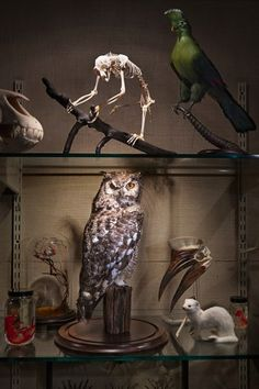 Understanding Owls: What does a gift say about the giver? by David Sedaris Photograph by Richard Barnes.