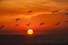 Sunset   Flickr: Intercambio de fotos