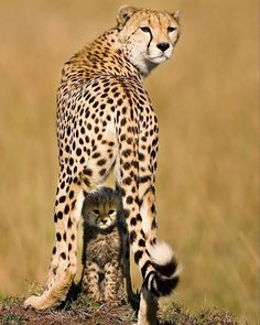 Wildlife Animals & Nature — .  Mommy and Me.  Photography by @ (Piper Mackay)....