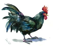 Black Rooster art original watercolor painting 14 x 11 in rooster lover wall art, rooster, kitchen art, farm animals, french country style by ORIGINALONLY on Etsy