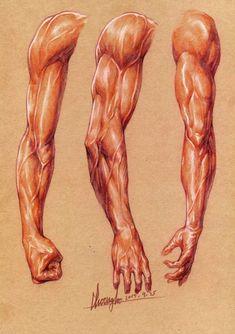 Arte Com Grey's Anatomy, Arm Anatomy, Human Anatomy Drawing, Human Figure Drawing, Anatomy Poses, Body Anatomy, Human Anatomy For Artists, Body Reference Drawing, Body Drawing
