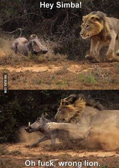 Funny pictures about Wrong lion. Oh, and cool pics about Wrong lion. Also, Wrong lion. Animal Memes, Funny Animals, Cute Animals, Funny Images, Funny Photos, Funniest Pictures, Jokes Photos, Hilarious Pictures, Too Funny
