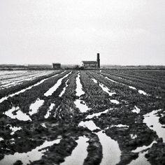 IL 3634 film