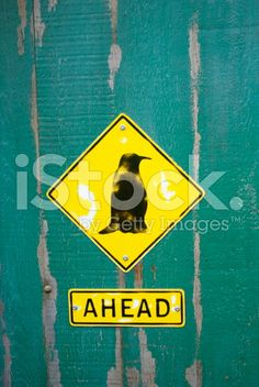 A sign shows Penguins are ahead on a distressed green wooden door. Wooden Doors, Colour Images, Image Now, Penguins, New Zealand, Nativity, Royalty Free Stock Photos, Birds, Color
