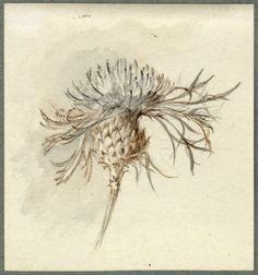 1996p1544.jpg (700×749)Ruskin, John (1819-1900)  Perennial Cornflower  4 3/8 X 4 in.  Pencil and brown ink  RF 1544