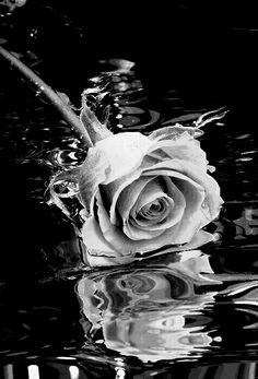 última pétula do nosso amor,quando um grupo de terrorista ataca a cidade e a domina totalmente,mtas pessoas sofrem pelo único motivo,aki quem resolve viver uma vida amorosa morre. Black And White Flowers, Black N White, Black And White Pictures, White Art, Dark Rose, Foto Macro, Arte Obscura, Beautiful Nature Wallpaper, Rose Wallpaper