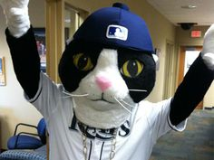 """DJ Kitty: Tampa Bay Rays New Mascot - """"No need to adjust your monitors, folks.That really was a cowbell-wearing, hip-hop kitty stalking the front offices of the Tampa Bay Rays on Wednesday. Baseball Mascots, Team Mascots, Dj Kitty, Rays Baseball, Baseball Wall, Pro Baseball, Baseball Stuff, Bay Sports, Sports Teams"""