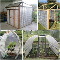Plastic Bottle Greenhouse on Homestead Plastic Bottle Greenhouse, Diy Plastic Bottle, Build A Greenhouse, Recycled Bottles, Amazing Gardens, Outdoor, Backyard Patio, Recycling, Indoor Garden