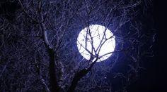 Full Moon Tree Branches Close Up — Stock Video © rajastills #59508913