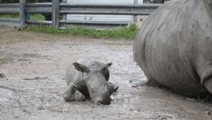 """Just throw mud at me why don't you. Thank you."" 