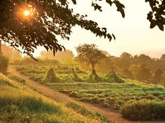 Thomas Jefferson was a passionate planstman—and epicure. A recent book sheds light on the restoration of Monticello& bountiful garden. Vegetable Garden Design, Garden Landscape Design, Vegetables Garden, Thomas Jefferson, Jefferson Monticello, Monticello Virginia, Bountiful Garden, Angeles, Farm Photography