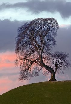 "oculi-ds: "" Dawn Tree by wentloog on Flickr. """