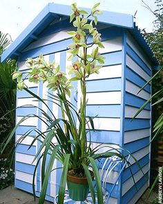 A blue and white painted shed, designed by Anthony Noel