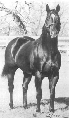 Famous Quarterhorses | everyone who knows anything about quarter horses has heard of easy jet ...