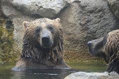 Rome. Bears at the zoo