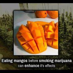 cannabis beleuchtung gefaßt bild der dddc medical marijuana smokers