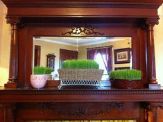 DIY: Growing Decorative Wheatgrass for Easter (or Anytime!) | Frugal Upstate