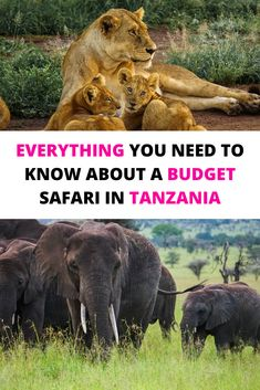 A budget safari in Tanzania is a fantastic way to experience the country's wildlife, creating unforgettable memories. Here's what to expect from a budget safari | Safari Tanzania | Safari Tanzania National Parks | Tanzania travel | Tanzania safari | Tanzania safari Serengeti | Tanzania safari lodges | Tanzania safari animals | Tanzania honeymoon safari |  Camping Safari Tanzania | Serengeti National Park Tanzania | Tanzania Serengeti National Parks | Serengeti Safari | Serengeti Safari Camp Morocco Travel, Africa Travel, Travel With Kids, Family Travel, Tanzania National Parks, Tanzania Safari, Travel Articles, Travel Guides, Travel Tips
