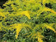 planta care vindeca vene varicoase tratamentul femeilor de vâscoză