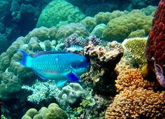 The Great Barrier Reef jigsaw puzzle in Under the Sea puzzles on TheJigsawPuzzles.com