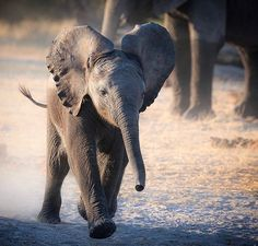 Most Popular Image, Top Ten, Elephants, Wilderness, Photographs, Africa, Hearts, The Incredibles, In This Moment