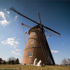 Grobbemolen te Fleringen, bij Aldbergen, Overijssel. Alhoewel de molen op een heuveltje staat, heeft de molen geen inritten en is het een grondzeiler. De roeden van de molen, met een lengte van 22 meter, zijn voorzien van het oudhollands hekwerk met zeilen. De molen heeft twee koppels maalstenen en een pelsteen.