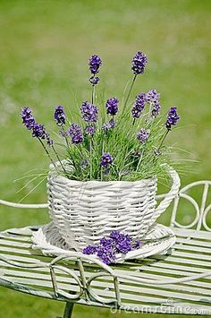 a Healthy and Wealthy Life garden caring for lavender plants in pots - cute basket!caring for lavender plants in pots - cute basket!garden caring for lavender plants in pots - cute basket!caring for lavender plants in pots - cute basket! Lavender Cottage, Lavender Blue, Lavender Fields, Lavender Flowers, Purple Flowers, Lavender Plants, Flowers Vase, Lavender Decor, Ikebana